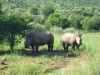 South-Africa-2